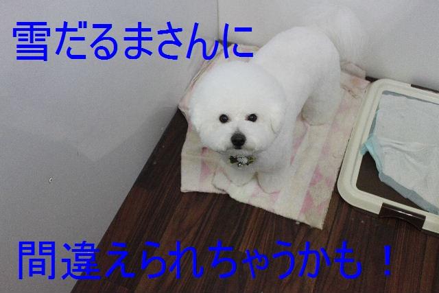 b0130018_19572142.jpg