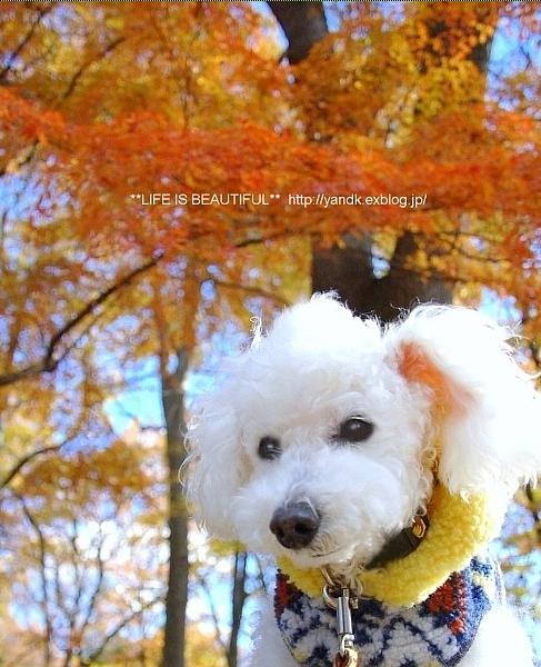 2014年の晩秋を彩った紅葉写真を一挙ご紹介!_f0357923_22494330.jpg