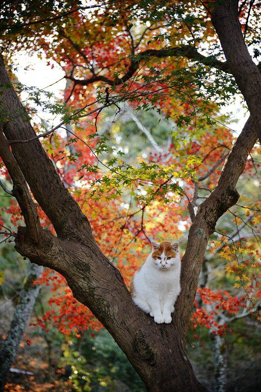 2014年の晩秋を彩った紅葉写真を一挙ご紹介!_f0357923_225023100.jpg
