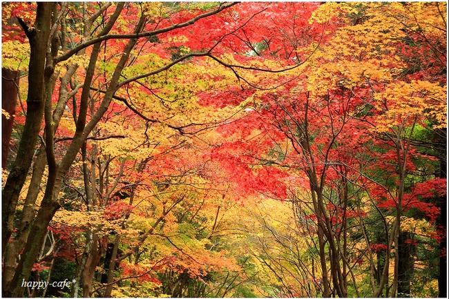 2014年の晩秋を彩った紅葉写真を一挙ご紹介!_f0357923_22541690.jpg