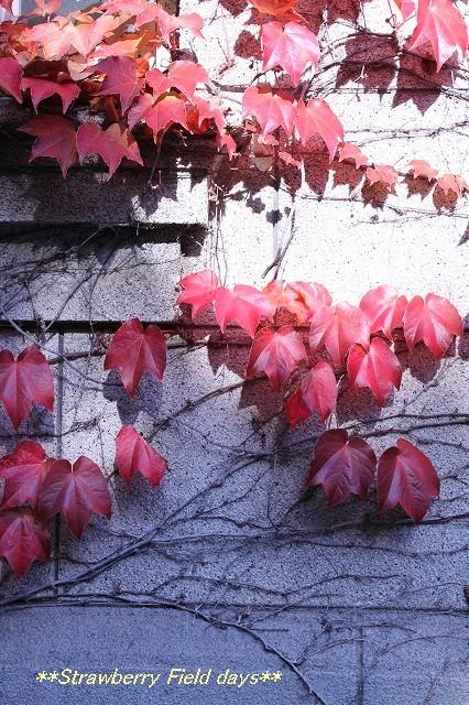 2014年の晩秋を彩った紅葉写真を一挙ご紹介!_f0357923_23161013.jpg