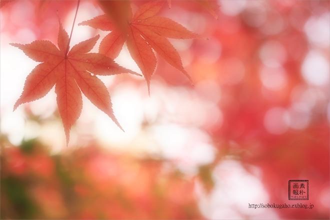 2014年の晩秋を彩った紅葉写真を一挙ご紹介!_f0357923_23181960.jpg