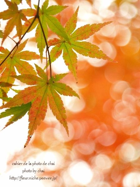 2014年の晩秋を彩った紅葉写真を一挙ご紹介!_f0357923_2331917.jpg