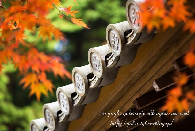 2014年の晩秋を彩った紅葉写真を一挙ご紹介!_f0357923_2359584.jpg