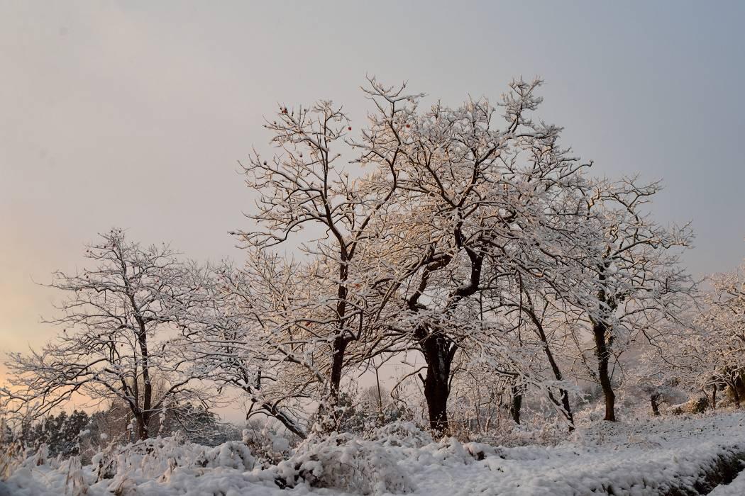 雪の朝(白石市) 12/7撮影_b0223668_8534243.jpg