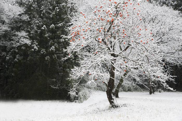 雪降り日_c0077395_17030269.jpg