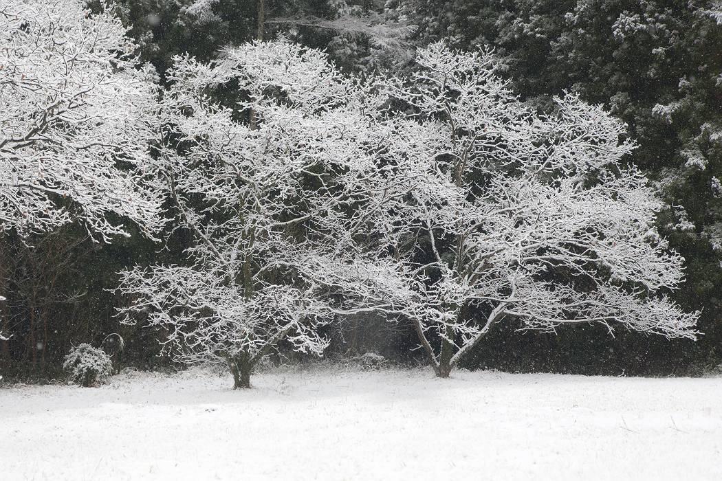 雪降り日_c0077395_17031677.jpg
