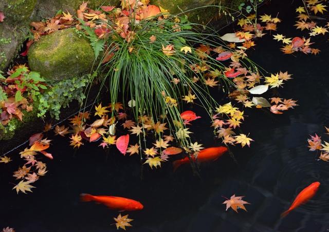 2014年の晩秋を彩った紅葉写真を一挙ご紹介!_f0357923_0235856.jpg