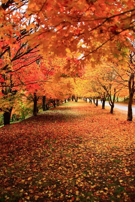 2014年の晩秋を彩った紅葉写真を一挙ご紹介!_f0357923_0433238.jpg