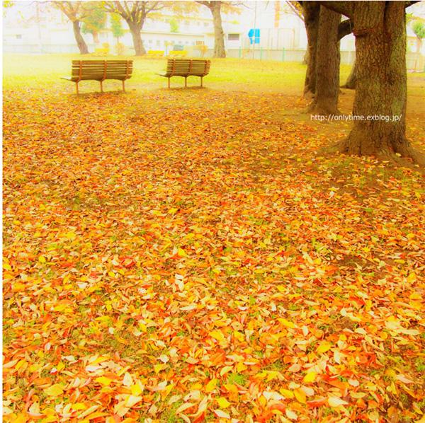 2014年の晩秋を彩った紅葉写真を一挙ご紹介!_f0357923_12134015.jpg