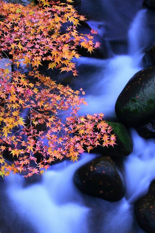 2014年の晩秋を彩った紅葉写真を一挙ご紹介!_f0357923_1294527.jpg
