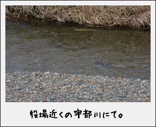 c0259934_11592512.jpg