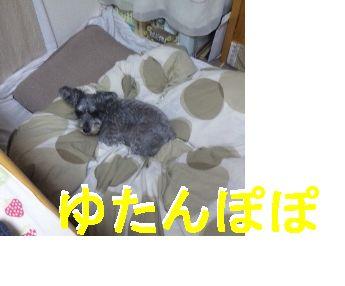 b0190637_11221127.jpg