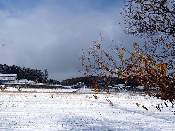2014年12月18日 雪の朝_b0341140_16251546.jpg