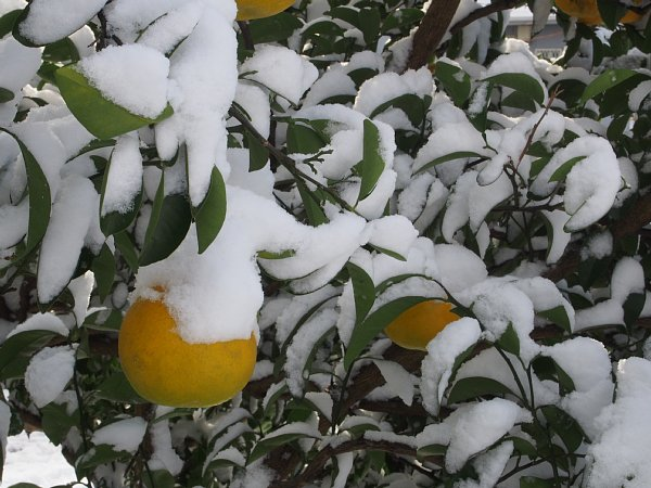 2014年12月18日 雪の朝_b0341140_16253084.jpg