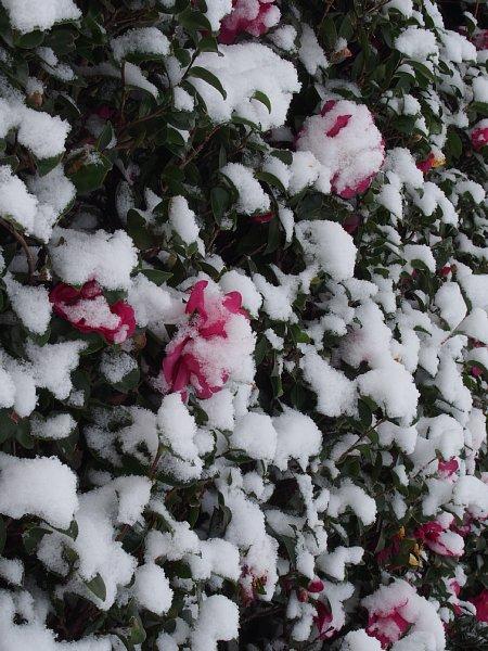 2014年12月18日 雪の朝_b0341140_16255183.jpg