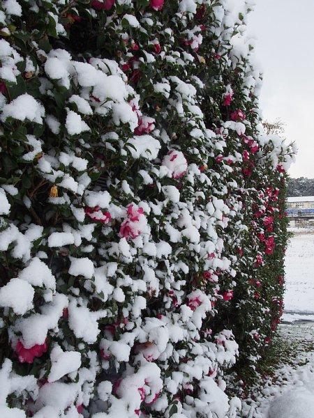 2014年12月18日 雪の朝_b0341140_1626254.jpg