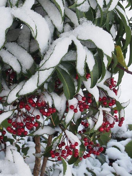 2014年12月18日 雪の朝_b0341140_162648100.jpg
