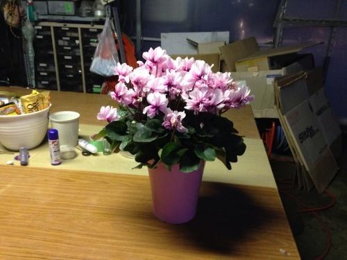 ピンクの花にはピンクの鉢_c0335145_18135144.jpg
