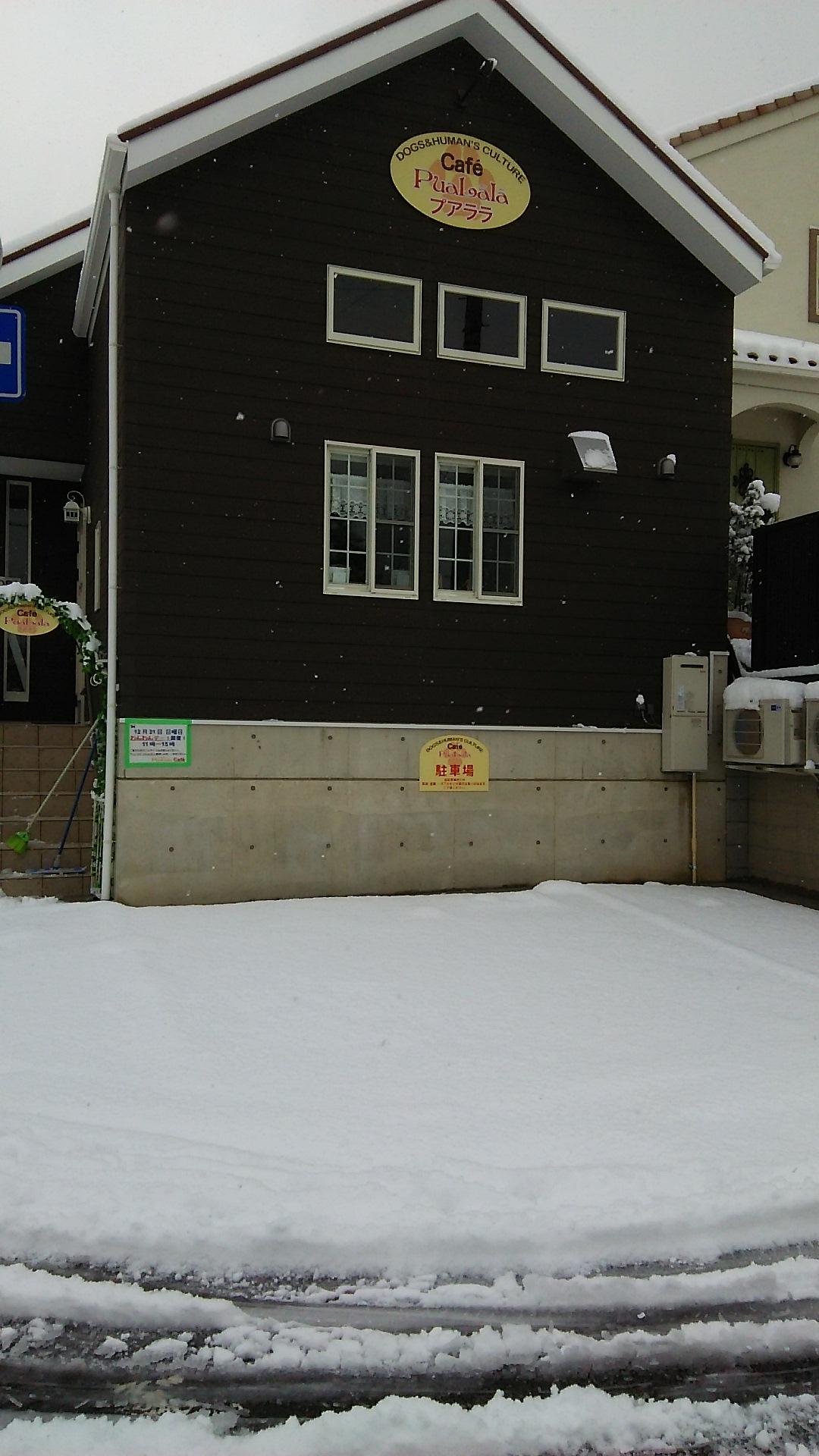 雪☆雪☆雪☆23㎝_d0256356_179861.jpg