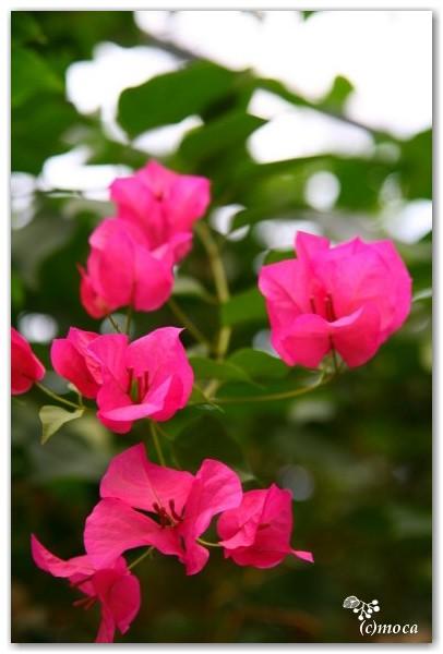 f0303056_16335078.jpg