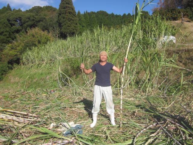 石垣島へサトウキビの収穫手伝いに行ってきました_e0181260_20453985.jpg