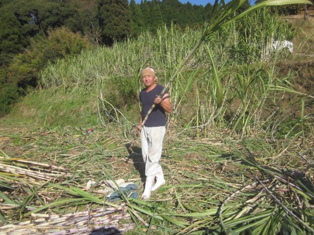 石垣島へサトウキビの収穫手伝いに行ってきました_e0181260_20501867.jpg