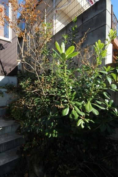 庭木の剪定_c0310571_08565330.jpg