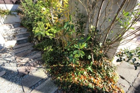 庭木の剪定_c0310571_08572779.jpg