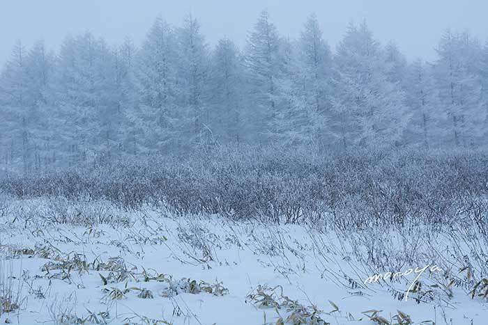 霧氷樹_c0085877_19563631.jpg