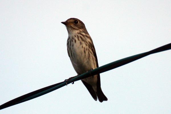 2014  9月に目撃した野鳥たち_b0084378_4415481.jpg