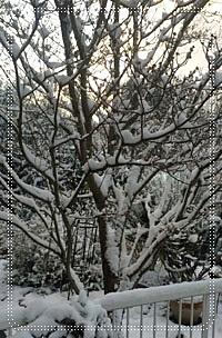 雪の朝_b0142989_2102752.jpg