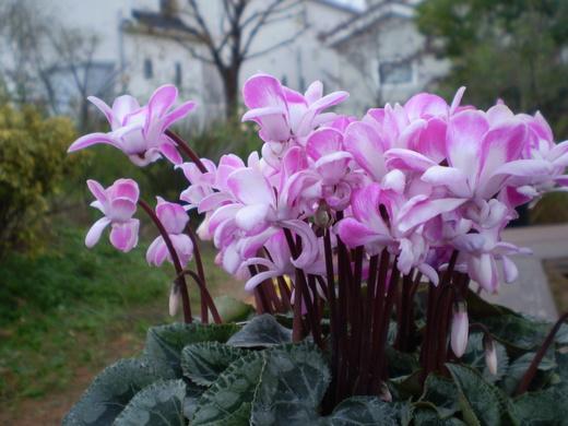 迎春ガーデンフェア   12/17(水)~12/30(火)_f0139333_0413699.jpg