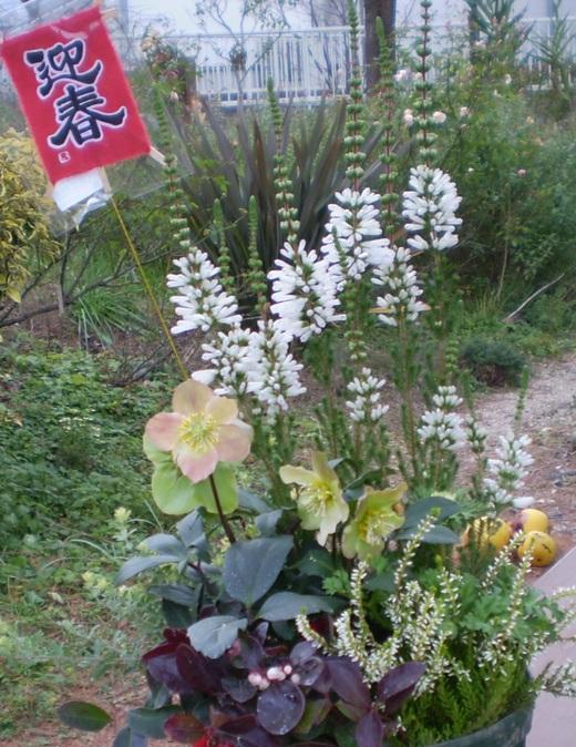迎春ガーデンフェア   12/17(水)~12/30(火)_f0139333_0485838.jpg