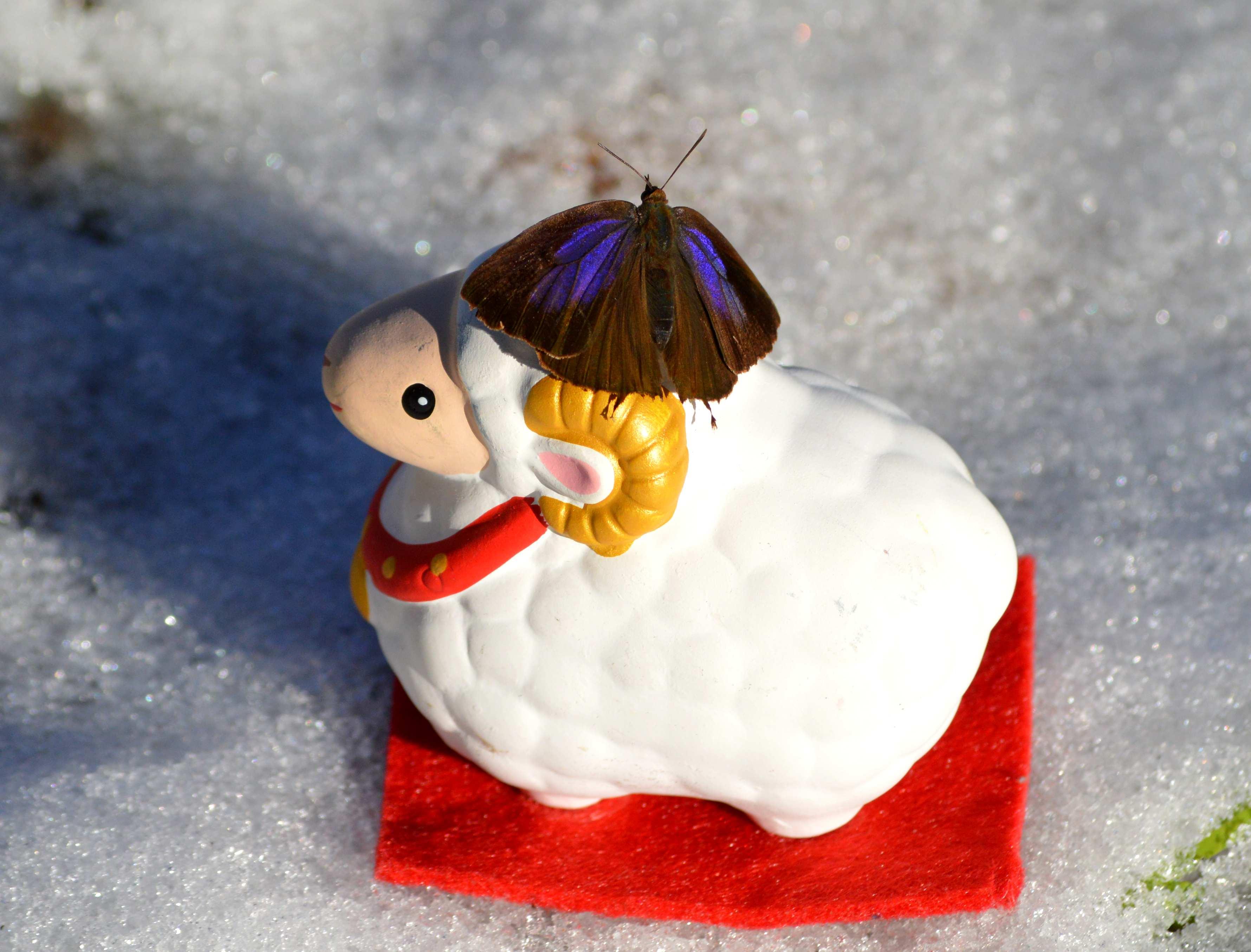 ムラサキツバメシジミ お正月 version!_d0254540_1630495.jpg
