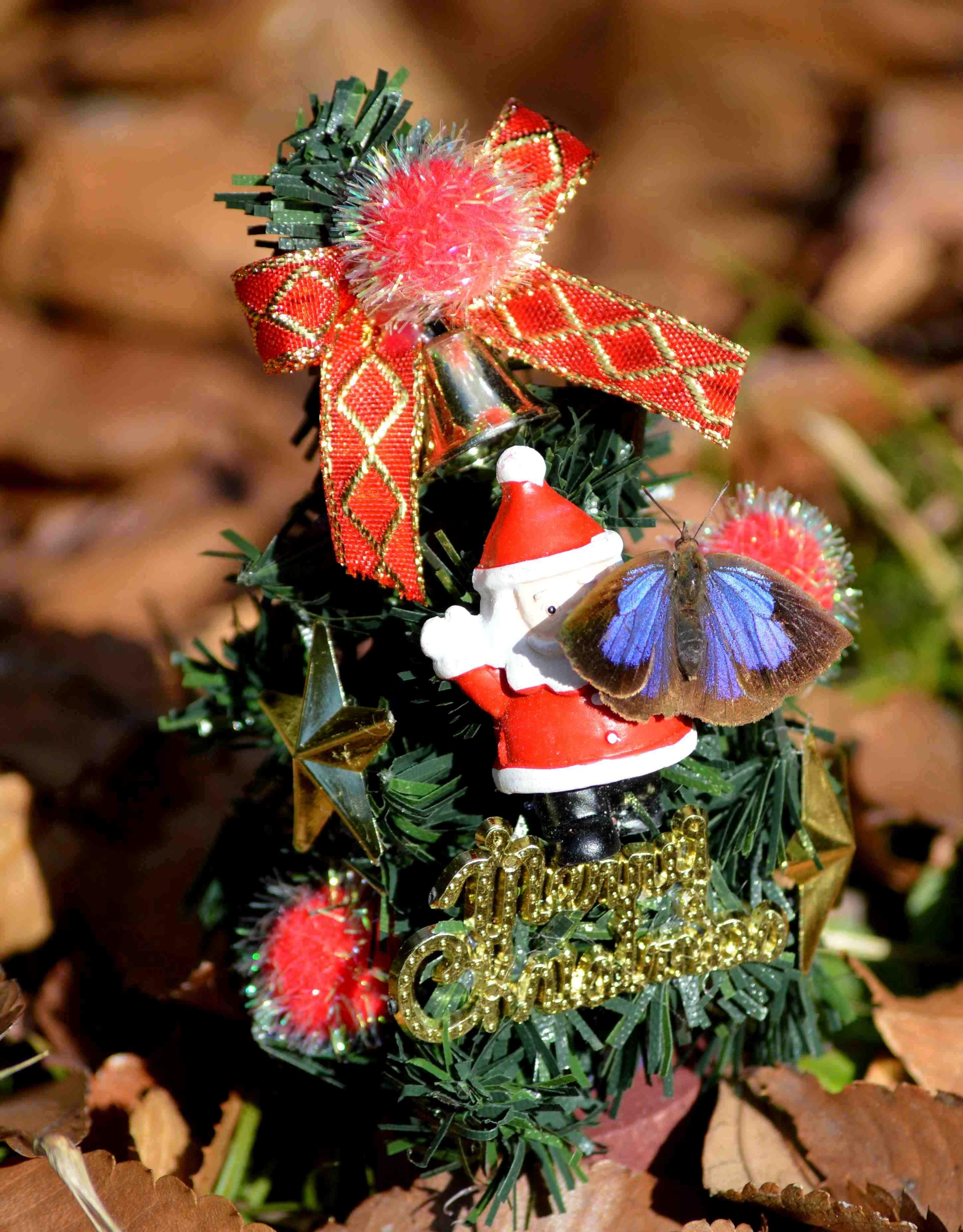 ムラサキシジミ Merry Christmas_d0254540_6391881.jpg