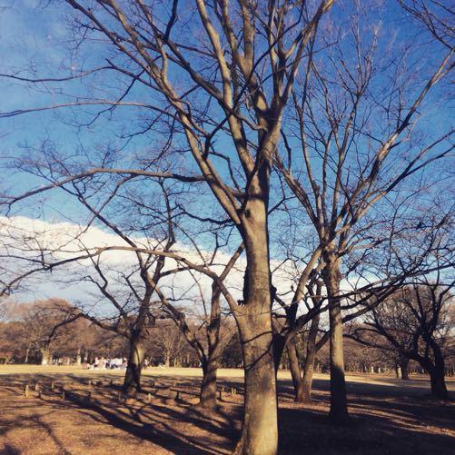 代々木公園_d0118072_1112339.jpg