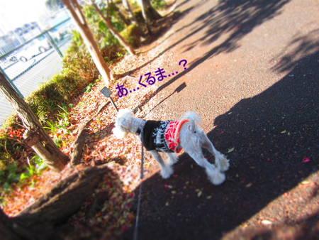 d0264176_2014191.jpg