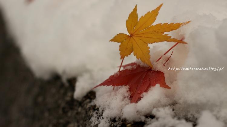 雪が積もった朝の道_b0324291_21053548.jpg