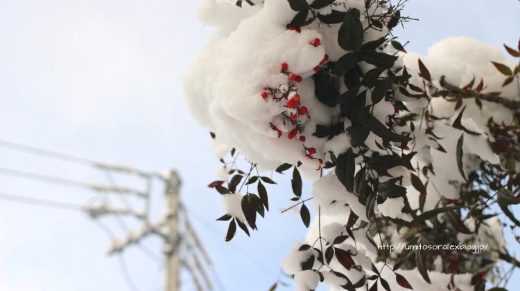 雪が積もった朝の道_b0324291_21053651.jpg