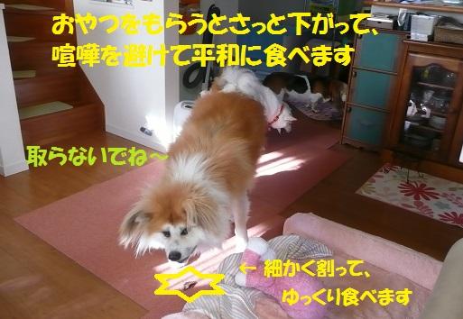 f0121712_23244899.jpg