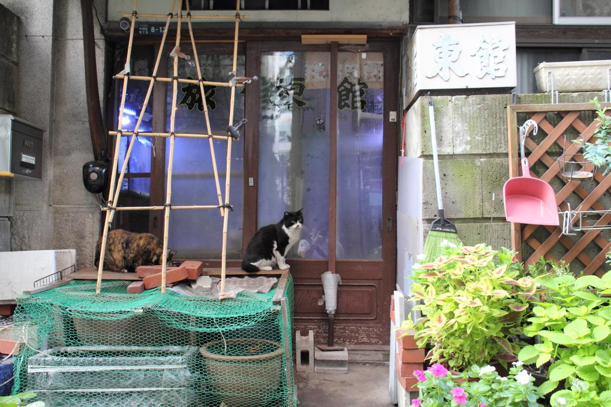 秋葉原  旅館「東館」のネコたち_b0061717_1314734.jpg