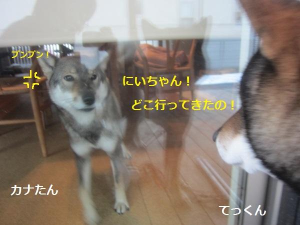 f0143123_206696.jpg