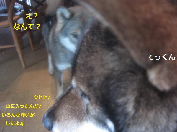 f0143123_2083180.jpg