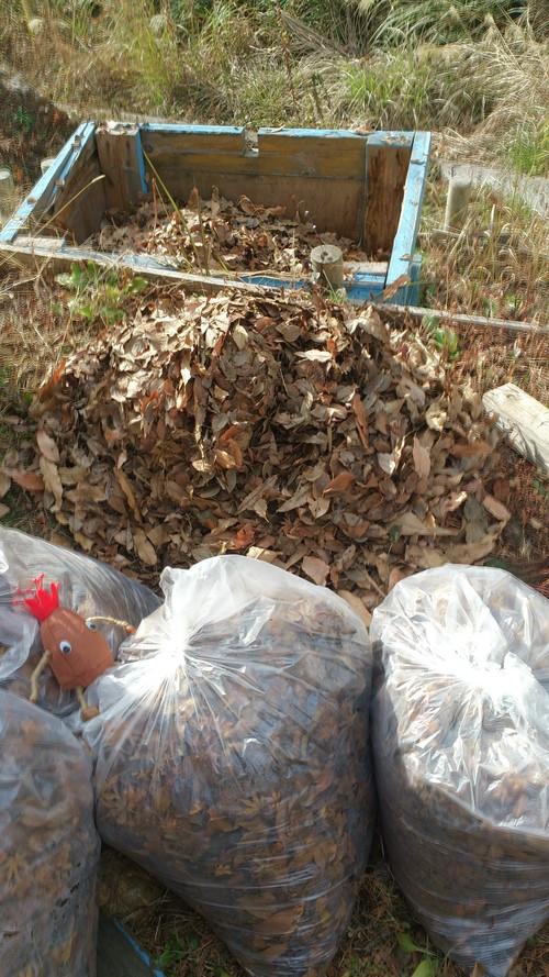 落ち葉堆肥 作ってみた_c0331145_2211048.jpg