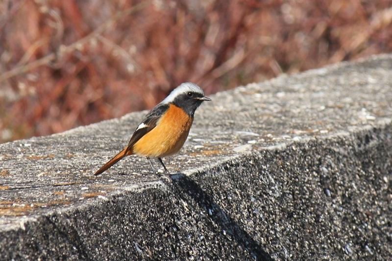 12月19日 今日の鳥_a0183666_19105661.jpg