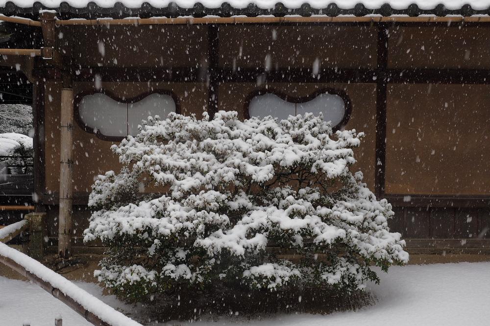 雪景色 京都 <詩仙堂>_f0021869_136195.jpg