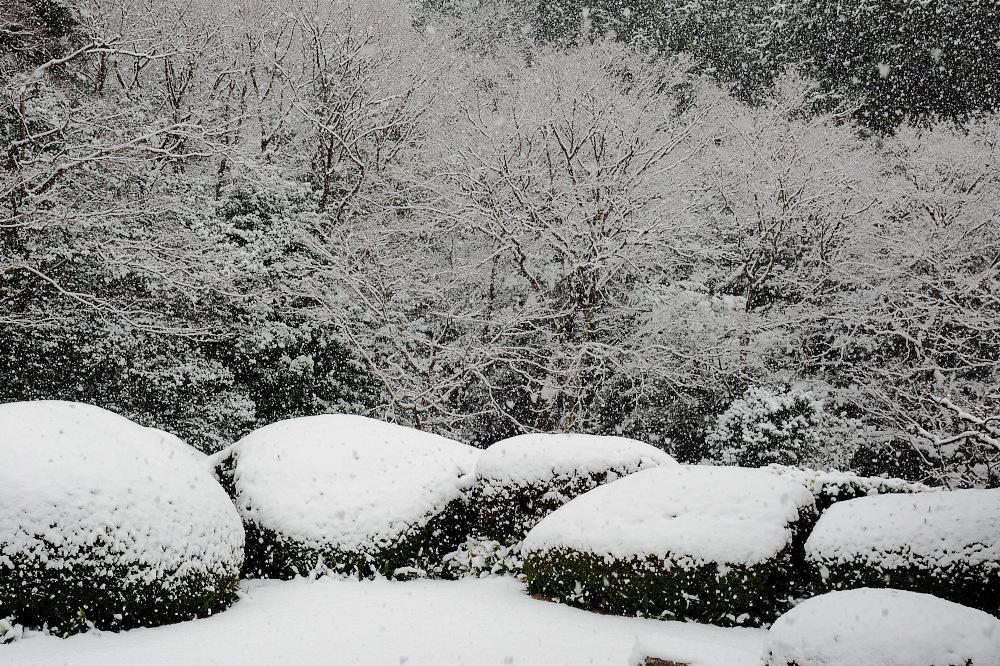 雪景色 京都 <詩仙堂>_f0021869_137236.jpg