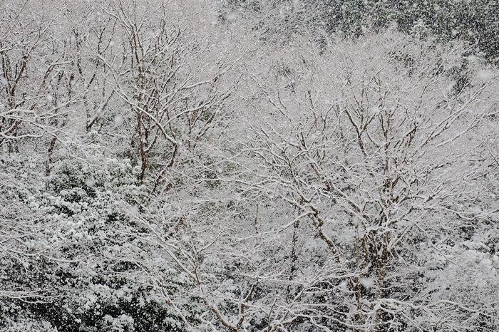 雪景色 京都 <詩仙堂>_f0021869_137501.jpg