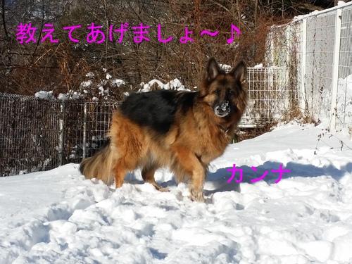 b0221982_1223261.jpg